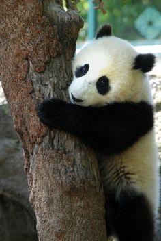 LIttle Tree Hugger | Flickr - Photo Sharing!