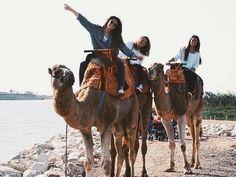 casual camel adventure