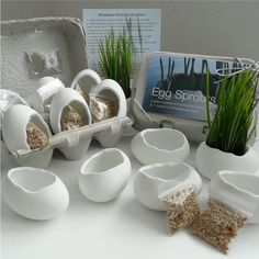 Porcelain Egg Planters Wheat Grass Kit Egg Sprouts