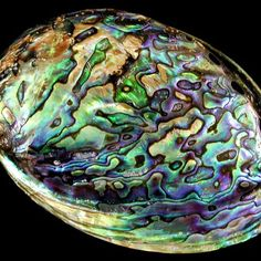 A beautiful abalone shell                                                                                                                                                      More