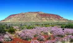 North West WA - the mighty Pilbara. I love the colour contrast between the land and the sky and the natural beaty of the nulla nulla adds so much visual focus. This is one of my favourite parts of Australia - I wish I had the skill to capture this place in a painting. Thanks heavens for photography and the many talanted photographers roaming our land.