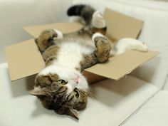 Maru- if you do not know who Maru is, please go to YouTube and educate yourself! :)