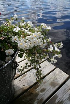 Happy Midsummer to you all pinners! May Flowers, White Flowers, Summer Solstice, Lake Life, Beach Cottages, Archipelago, Four Seasons, Summer Time, Scenery
