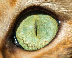 Choáng ngộp với 15 hình ảnh cận cảnh mắt loài mèo
