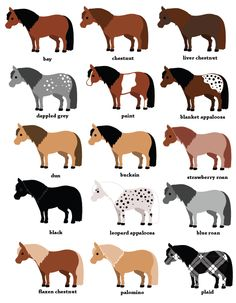 """Graphic of Horse Coat Colors """"A Horse of a Different Color"""""""