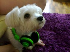 my dog love music :)