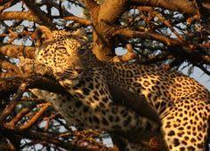 Part of my bucket list...an African safari trip