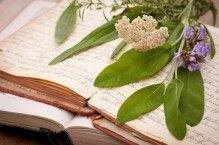 Zehn der mächtigsten Heilpflanzen Medicinal plants are often underestimated. Garden Care, Home Remedies, Natural Remedies, Herbal Essences, Plant Needs, Oils For Skin, Medicinal Plants, Detox Recipes, Herb Garden