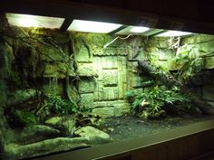 Best Totally Free Reptile Terrarium setup Suggestions There's no doubt which possessing a family pet may bring much enjoyment for you to someone else's life. Large Terrarium, Terrarium Reptile, Aquarium Terrarium, Hanging Terrarium, Aquarium Fish, Terrarium Diy, Reptile Habitat, Reptile House, Reptile Room