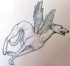Gift - Flying Whippet by ~basi on deviantART