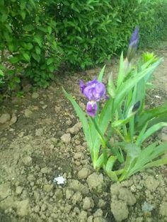 lucruri interesante: Florile mele.Miercurea fara cuvinte