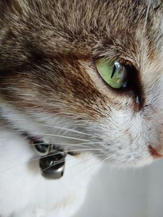 domestic, pets, cat, domestic animals, mammal, one animal, domestic cat, animal themes, animal, feline, close-up, vertebrate, animal body part, whisker, no people, animal head, animal eye, eye, looking, looking away, tabby, animal nose, animal mouth, snout
