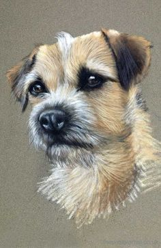 Border Terrier drawn in pastels Order an oil painting of your pet now at www.petsinportrait.com