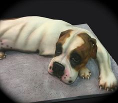 boxer-dog-cake-full | by debbiedoescakes