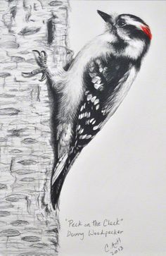 Downy woodpecker bird drawing by Carolyn Antl. Bird Drawings, Animal Drawings, Vogel Illustration, Downy Woodpecker, Scratchboard Art, Graphite Art, Bird Sketch, Tattoo Graphic, Spirited Art