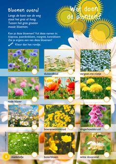 Wat doen de planten in de zomer? @keireeen Education World, Kids Gifts, Flora, Homeschool, Scouting, Projects, Crowns, Spring, Learning