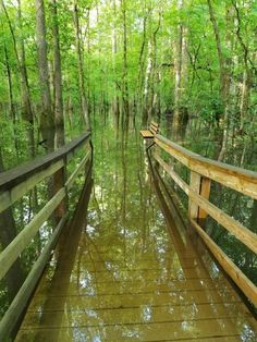 Things to do at Congaree National Park in South Carolina! What to see in the epic forest and rivers that run through the park. One of Americas coolest National Park Sites. Montana National Parks, Us National Parks, New Orleans, New York, Travel Usa, Travel Tips, Travel Goals, State Parks, The Places Youll Go