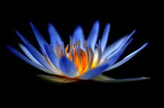 Without mud, you cannot have a lotus flower. Without suffering, you have no ways…