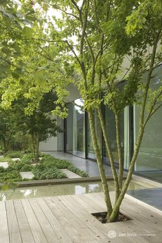 Trees integrated in terrace forming an artsy combination between wood, water, st. - Trees integrated in terrace forming an artsy combination between wood, water, stone and plantation -