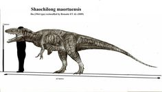 remake of this[link] Shaochilong is the smallest carcharodontosaurid together with concavenator. The animal was metres long ,hadshark like teeth and. Jurassic Park, Jurassic World, Dinosaur Drawing, Prehistoric Creatures, Natural History, Predator, User Profile, Moose Art, Deviantart