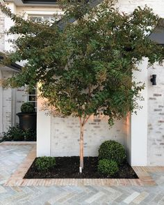 Cotto Antico Luce borders this herringbone paved driveway by ⠀ ⠀ Courtyard Landscaping, Driveway Landscaping, Backyard Pavers, Acreage Landscaping, Backyard Landscaping, Landscaping Ideas, Back Gardens, Outdoor Gardens, Prado