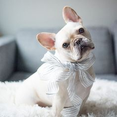 This holiday, give presence.  #frenchie