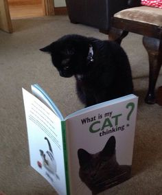 "Top 10 Images of Cats Reading Books. ""What is my cat thinking?"" Hmm, not sure any human knows the answer to that one."