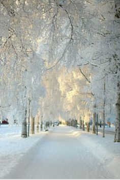 I would love to be walking in this winter wonderland...this is breathtaking.