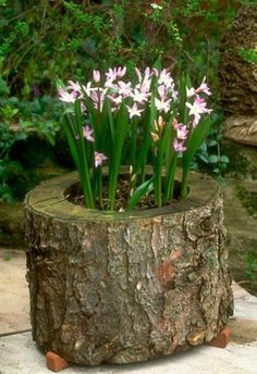 Stump and flowers idea.