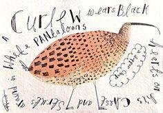 curlew-angela-smyth