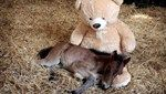 This Orphaned Little Pony Has an Adorable Friend