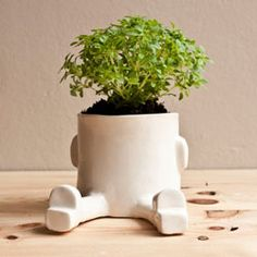Espatarrado - Maceta cerámica - Wacamole ceramic
