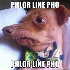"""phlor line pho phlor line pho   Tuna, the """"Phteven"""" dog"""