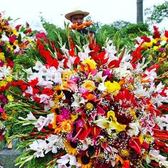 Today marks the beginning of Feria de las Flores - Colombia's festival of flowers. The festival last almost 2 weeks ending on 7th August!       #feriadelasflores #festival #festivalofflowers #festivalofflowers2017 #flowers #colour #colourful #colombia #colombiana #southamerica #latinoamerica #fiesta2017 #fiesta #party #carnival #carnival2017 #medellin #medellincolombia #medellincolombia