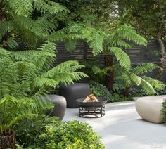 Calm in the City - Garden Design & Landscaping Project Fire Pit Seating, Fire Pit Area, Fire Pits, Ferns Garden, Shade Garden, Landscaping With Rocks, Backyard Landscaping, Landscaping Ideas, Modern Planting