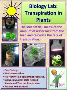 Transpiration in Plants - A Biology Lab. $
