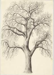 26 ideas realistic willow tree tattoo ink drawings for 2019 Plant Drawing, Painting & Drawing, Drawing Trees, Drawings Of Trees, Tree Drawing Simple, Basic Drawing, Drawing Drawing, Drawing Lessons, Tree Drawings Pencil