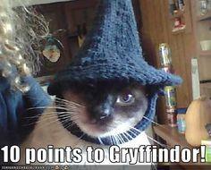 """""""10 points to Gryffindor!"""" by bjartmar at icanhascheezburger. lolcats, harry potter, cats"""