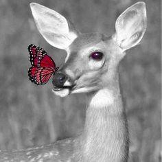 20 animaux et des papillons… Walt Disney pour de vrai Walt Disney, Bambi, Nature Animals, Animals And Pets, Wild Animals, Animals Images, Farm Animals, Cabras Animal, Beautiful Creatures