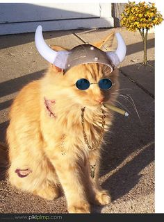 #Good Cat Gone Bad!!  Like,Repin,Share, Thanks!