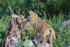 We have to put an end to poisoning dingoes
