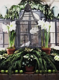 Bunny Williams uses an antique birdcage to house a beautiful white dove