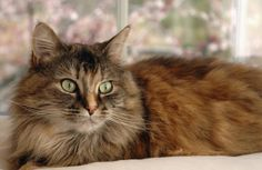 Adopting a Cat | Rescue A Cat - Pet360 Pet Parenting Simplified #HillsAdoptionMonth