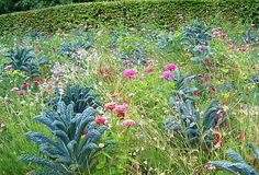 Tuscan kale & bubblegum pink zinnias - awesome combination!
