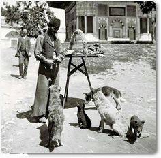 An Ottoman Simit Seller Sharing His Simits With Street Dogs, Turkey History, Street Dogs, Asia, History Of Photography, Fashion Photography, Slow Travel, Old Dogs, Ottoman Empire, Historical Pictures
