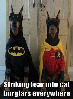 Batman and Robin Great Dane Duo