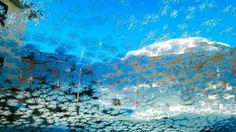Rovere - Cristalli di ghiaccio