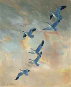 Snow geese in flight, sunset