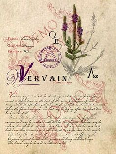 Vervain-page | Flickr - Photo Sharing!