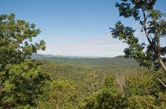 Floresta Estacional Semidecidual  Fitofisionomia do bioma da Mata Atlântica